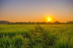 Open field at an orange sunset