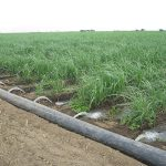 Large commercial irrigation system