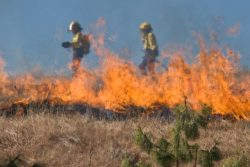 Group of fire fighters backburning a dry field