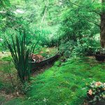 Lushes garden with moss covered floor