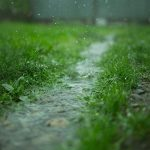 Rainy path half covered by green grass