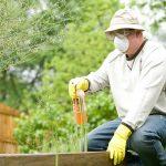 Man in paiters mask and bucket hat fertalising vegtable garden