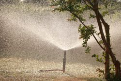 Singular sprinkler rapidly watering grass