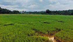 Flooded crop