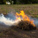 Burning Grass — North Coast Power & Water in Coffs Harbour, NSW